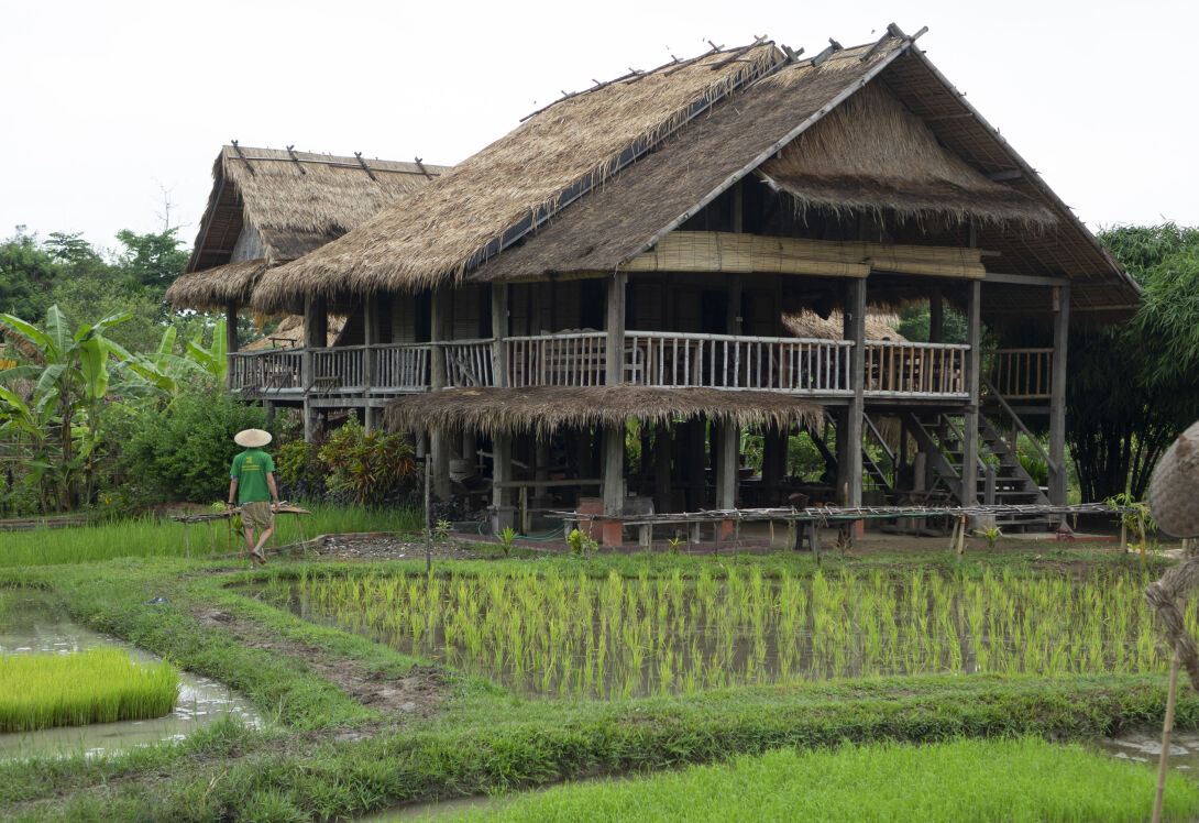 Get hands-on experience of rice farming life at the Living Lands Organic Farm