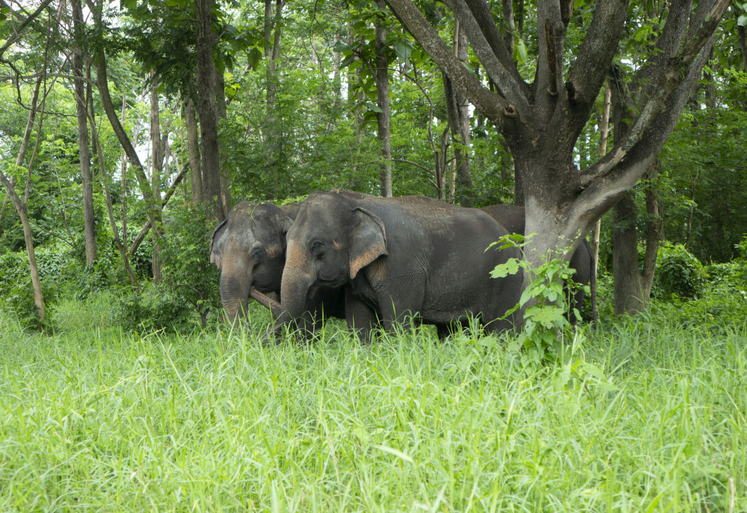 Inspire young naturalists with pioneering elephant conservation at Anantara