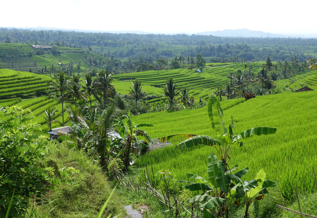 Go wild with snorkelling and trekking in West Bali National Park