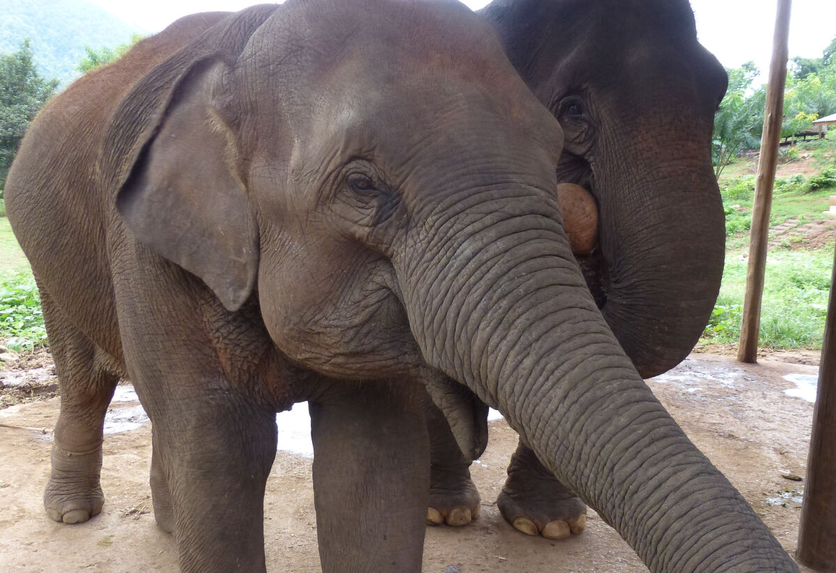 Green Hill Valley Elephant Camp, Myanmar