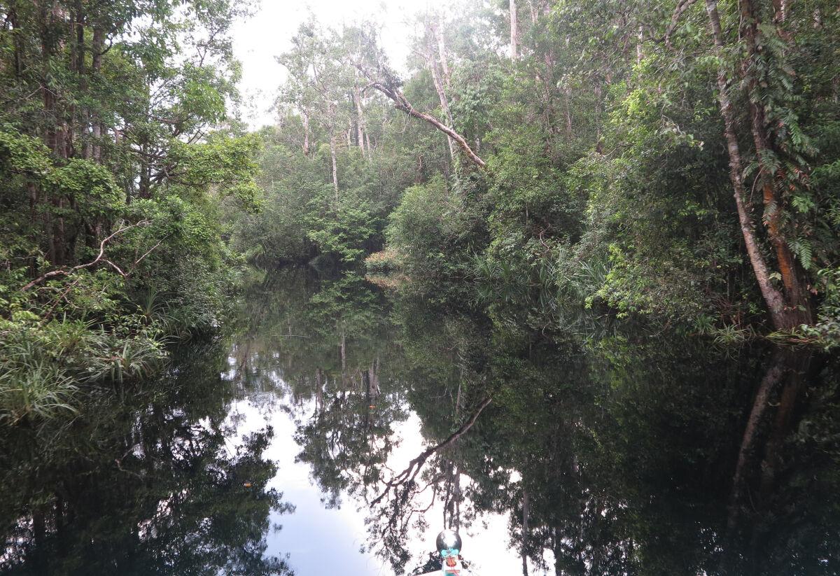 Private riverboat adventure in Tanjung Puting National Park