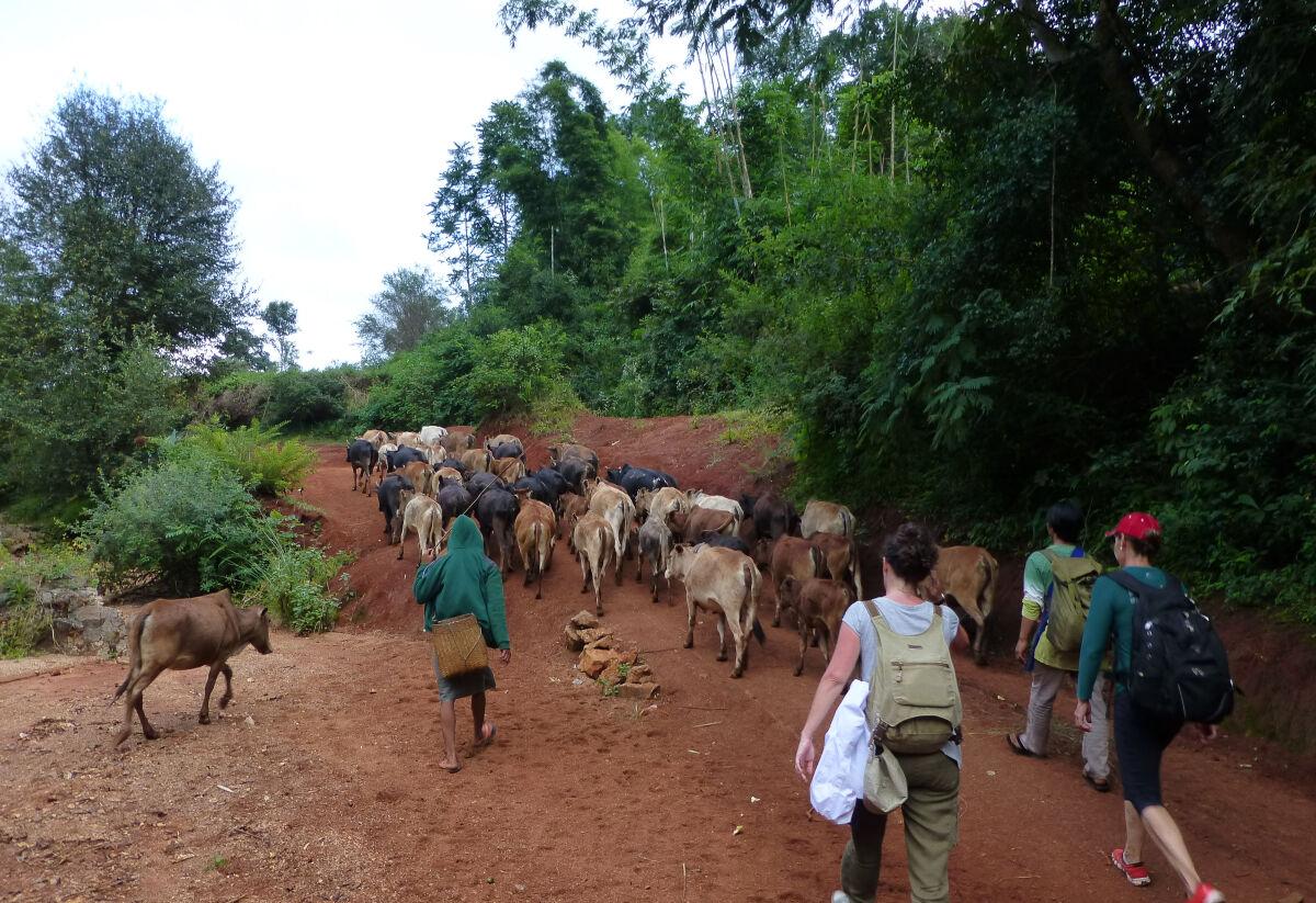 Kalaw to Inle monastery trek
