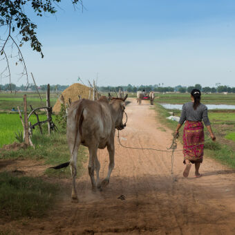 Get hands-on experience of village life in rural Cambodia…