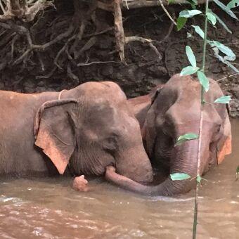 Mondulkiri Cambodia Ethical Elephant Conservation