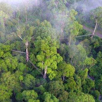 Luxe Borneo