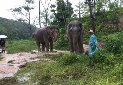 Pioneering elephant conservation in Phuket