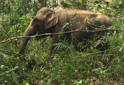 Walking with elephants in Mondulkiri