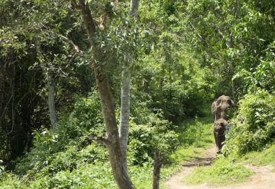 Elephant Conservation Centre, Laos