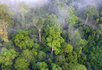 Borneo Rainforest Lodge & Danum Valley