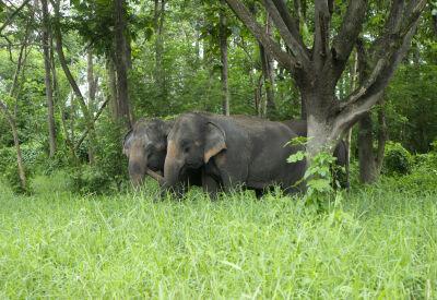 Anantara Elephant Camp, Golden Triangle