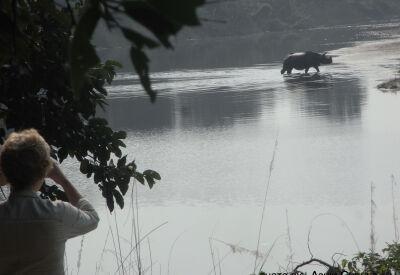Rhino spotting in Chitwan National Park, Nepal