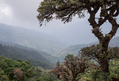 Climb Mount Victoria in Myanmar's Chin State