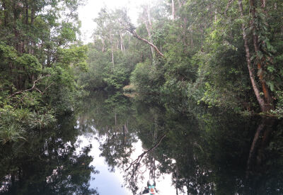 Private riverboat adventure in Tanjung Puting National Park