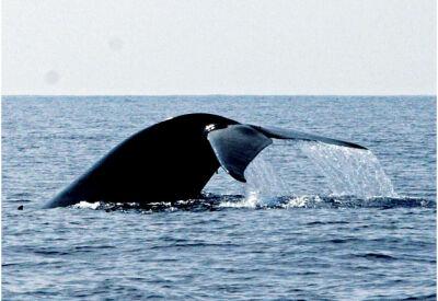 Whale-watching around Sri Lanka