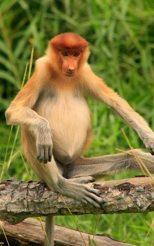 Family holidays to Borneo