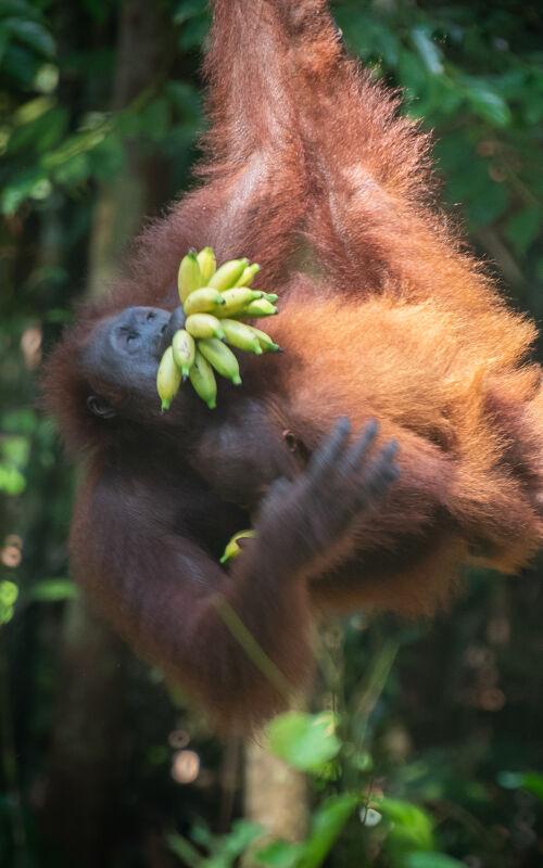 Borneo travel blog