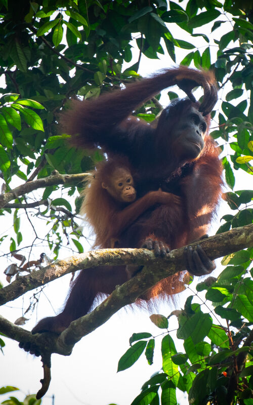 Borneo wildlife guide