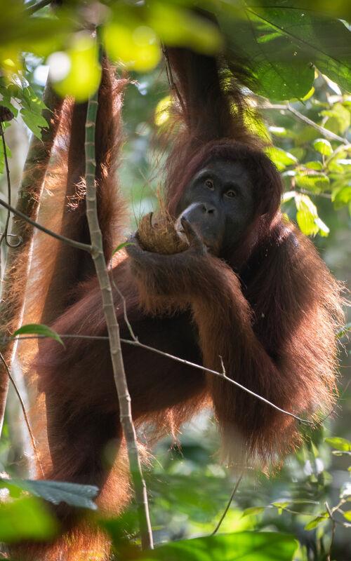 Borneo honeymoons