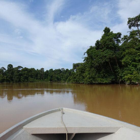 Cruise through Borneo's rainforest riverways