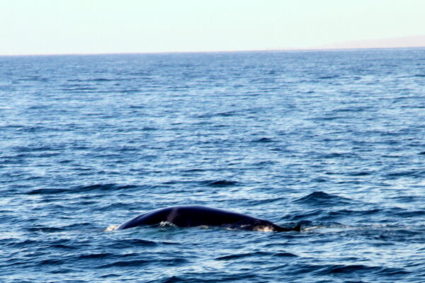 Take a boat trip to see the abundant whales and dolphins
