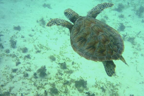 Diving around Gaya Island