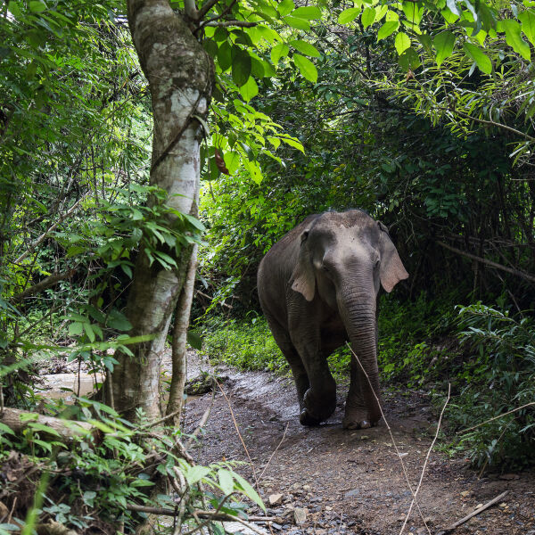 Be part of the team for a day at the inspirational Mandalao Elephant Sanctuary