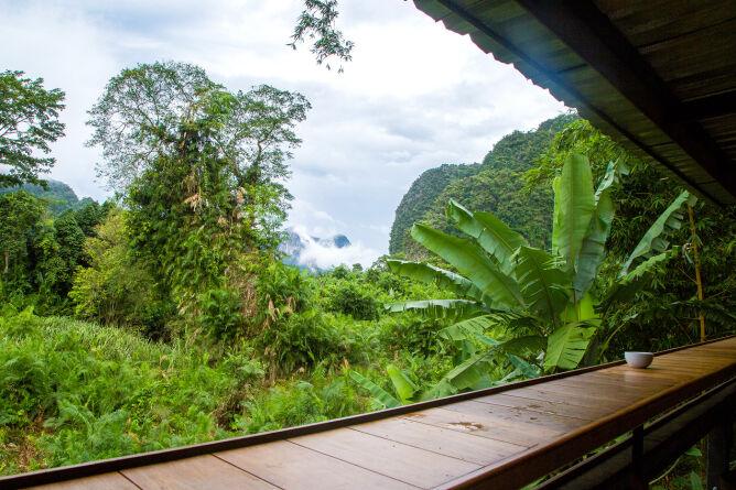 Rainforest on your doorstep