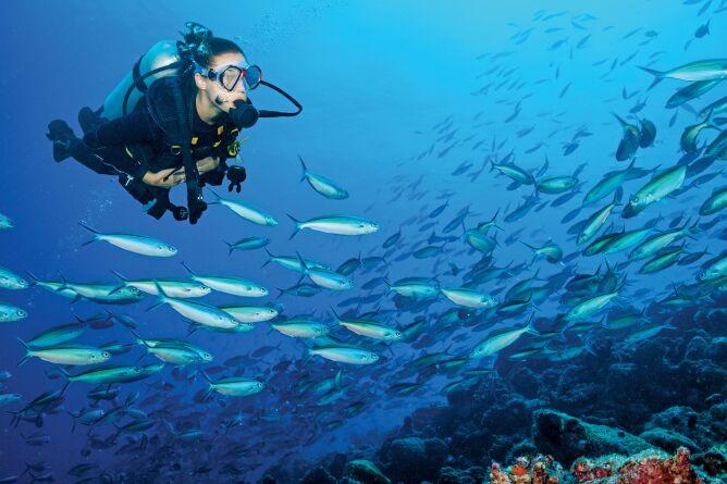 Excellent diving