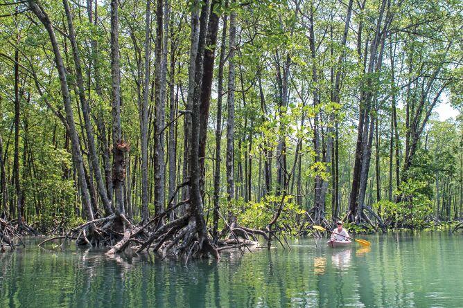 Kayaking amongst the mangroves