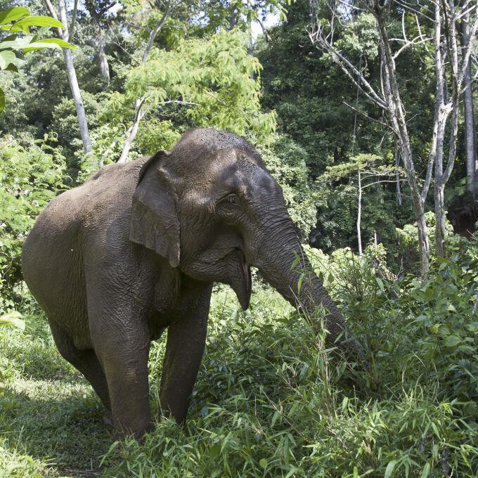 Walking with elephants Mondulkiri