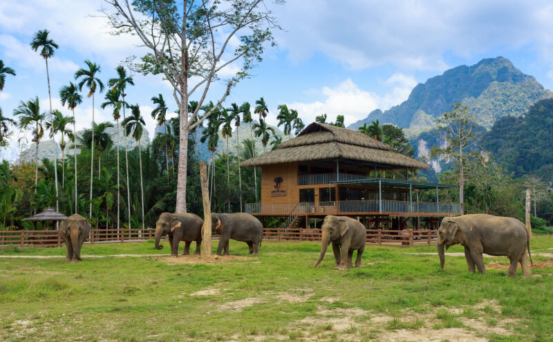Elephant Hills tented camp