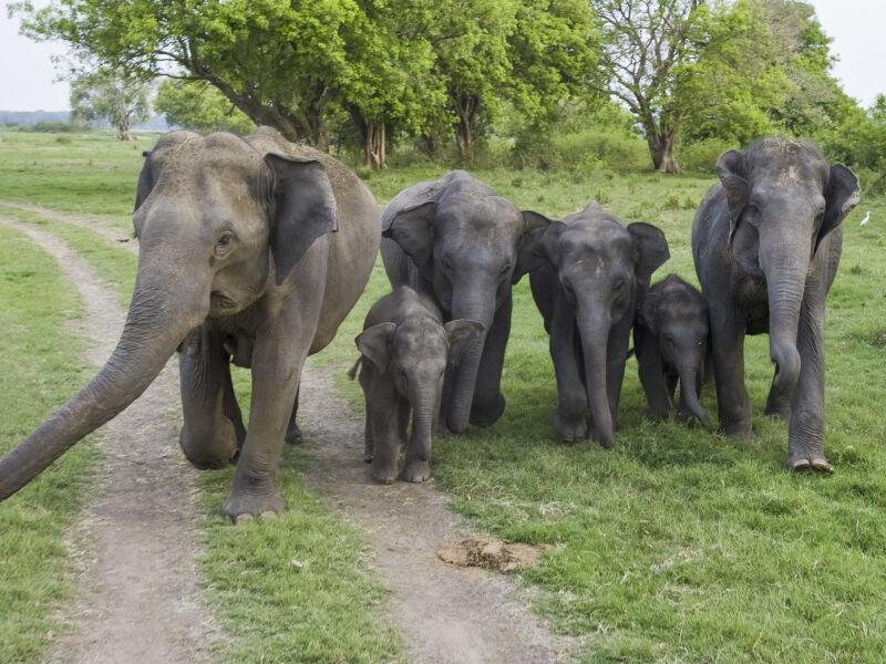 Minneriya National Park, Sri Lanka