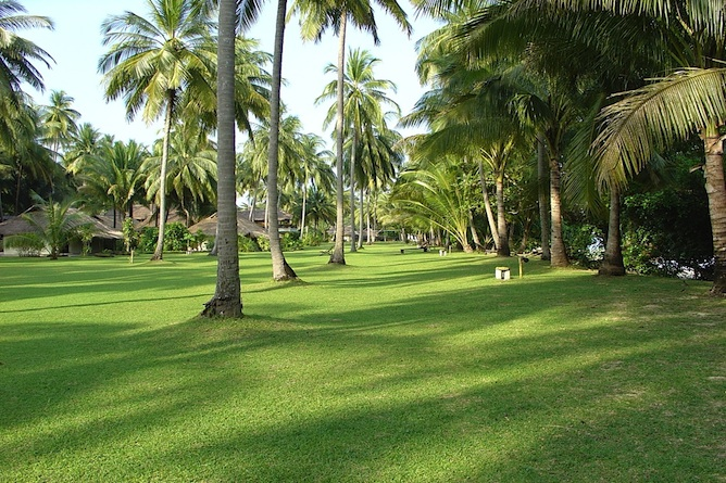 Coconut trees in the grounds