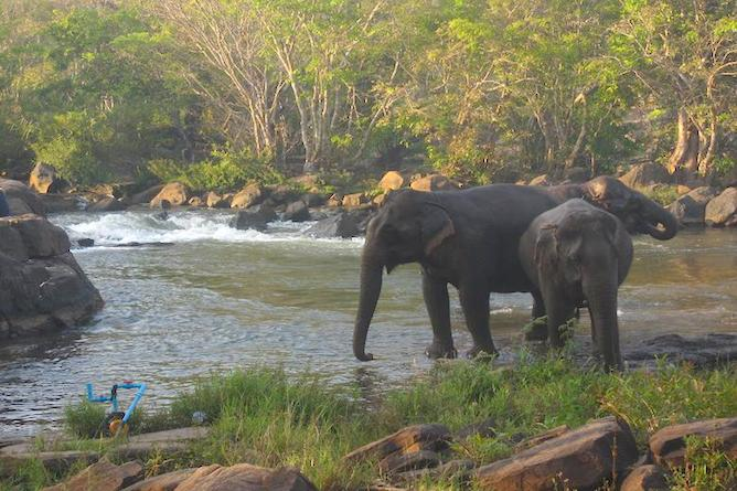 Elephants can be found in abundance in the area
